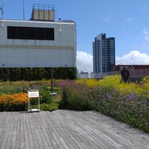 久々の中央図書館と札幌駅