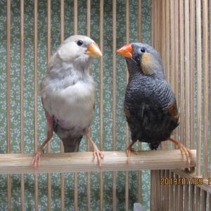 出品中♪ きんか鳥