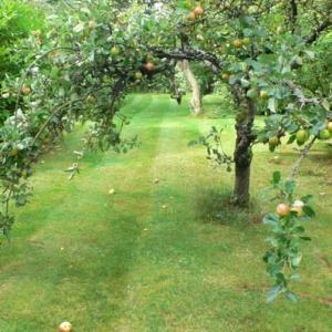ガーデンのリンゴの木