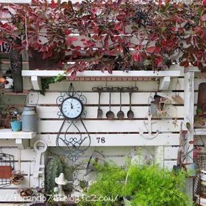11月の庭はいつの間にか晩秋でした・・・♪
