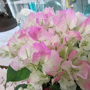 届いたお花の名前はブーゲンビリア「ピンクレディ」です・・・♪