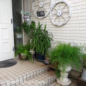 玄関前の模様替えと台風10号の影響・・・♪