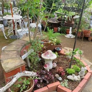 ガーデン改造計画進行中・中央花壇・・・♪