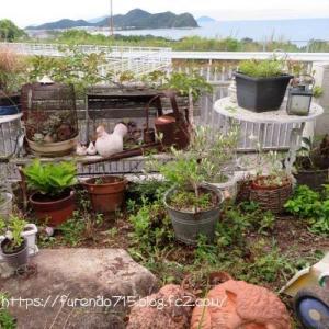 ガーデン改造計画見直し、道路側ガーデン・・・♪