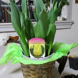 届いたお花は春を運んでくれました・・・♪
