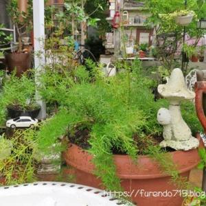 観葉植物の生命力に感動です・・・♪