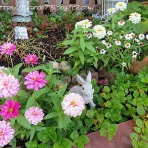 真夏の庭はお花が少なくて・・・♪