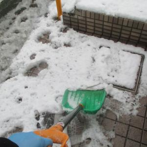 食後の運動(笑) 積雪 練馬区大泉町5丁目6番16号&17号はOK!(笑)