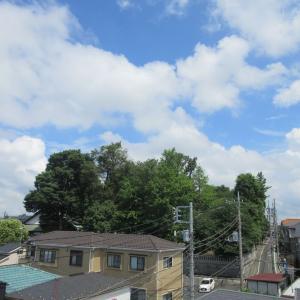 今日も屋上より大泉氷川神社パワーを吸収しスタートしている弊社なり!
