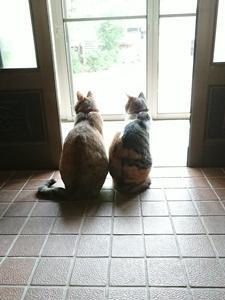 外を眺めるにゃんず&窓辺のセージ