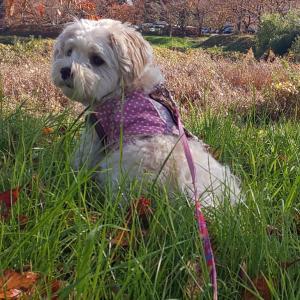 マルプーバニラと秋空散歩