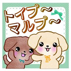 【トイプードル&マルプーちゃん】