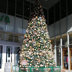 クリスマスツリー~水の宇宙船?!(笑)☆