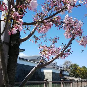 桜~富士山☆