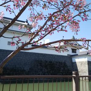 駿府城公園~桜☆
