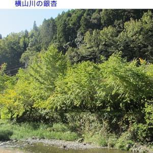 横山川の紅葉はこれから  八女市