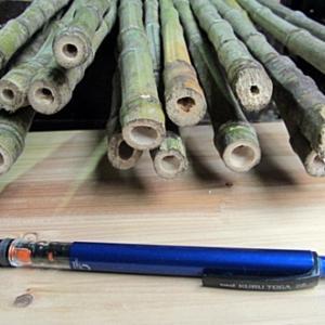 鹿児島県の布袋竹は肉厚です