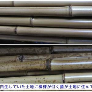 白い竹と模様が付いた竹