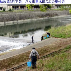 6月1日鮎釣り解禁&矢部川水系