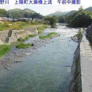 鮎が下流に落ちる時期になり、雨で少し河川の水が増えています