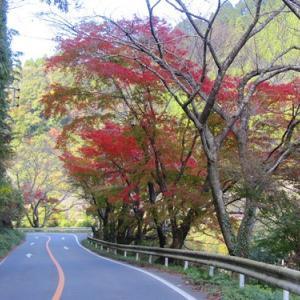 福岡県矢部村の紅葉