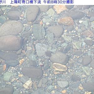 星野川朝の水量
