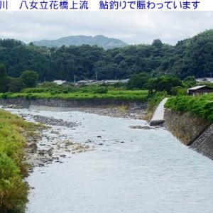 矢部川&星野川は鮎釣りで賑わっています