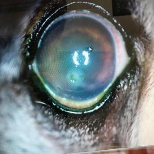 にこ、目の負傷