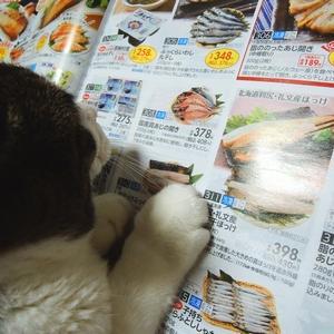 * 1月27日のお弁当+*