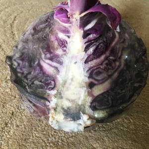 冷蔵庫に紫キャベツを放置し続けたらどうなるのか?