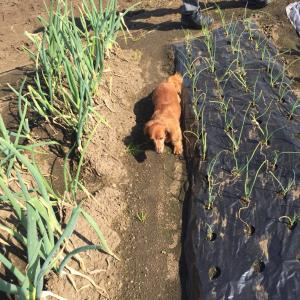 ガスコンロ交換と、秋の収穫