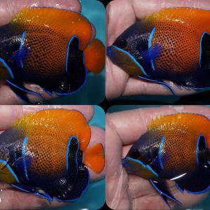 インドネシア便入荷‼️久しぶりのお魚が