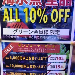 セールの告知とオススメ生体!!