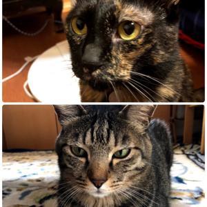 猫ねこ猫ねこ