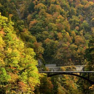 白山白川郷ホワイトロードの麓に広がる紅葉スポット 萌える紅葉に彩られる渓谷と滝のコラボレーション