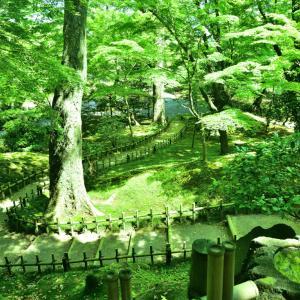 翡翠の回廊が織りなす日本三大庭園  朝日に輝く新緑の兼六(けんろくえん)散策日記
