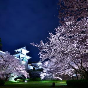ライトアップされた満開の夜桜並木が美しい夜の金沢城公園「金沢城の観桜期限定夜桜ライトアップ」