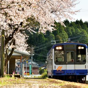これぞローカル線ならではのまったりとしたセカイ 能登半島にポツンとある笠師保駅の桜並木とのと鉄道のコラボレーション