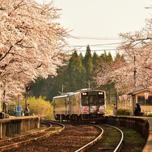 美しい桜トンネルをまったりと走るローカル線「のと鉄道」のコラボレーションが素晴らしい能登さくら駅の桜並木