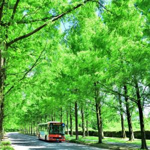 金沢のベットタウンに広がる新緑のメタセコイア並木は、まるでおとぎ話のような翡翠の回廊が美しかったです(*'▽')♪