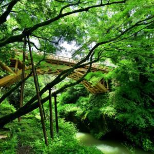新緑に包まれたセカイに架かるのは、山中温泉を代表する名勝地として新たに生まれ変わった4代目こおろぎ橋