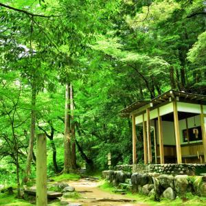 光と影が織りなす翡翠のセカイと暗緑色のセカイが交差する新緑の鶴仙渓(かくせんけい)遊歩道