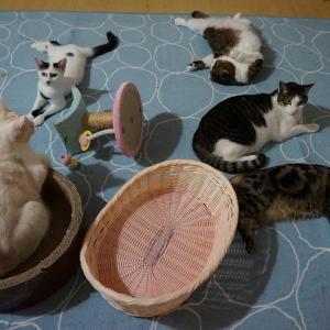 11/12 [11/10] 猫好きの猫肌恋しい季節!