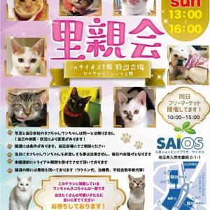 1/24①[1/8(水)] 1月・2月の保護犬保護猫譲渡会のお知らせ。