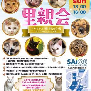 2/16 [2/15(土)]入間市内 2/23(日)保護犬保護猫譲渡会のお知らせ。