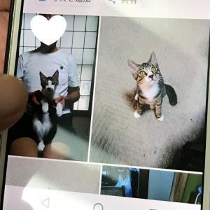 7/30[7/24(金)] 卒業保護猫ら~の幸せ便り♪