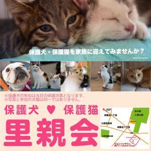 10/26[10/25(日)] 11/3・11/8入間市内・保護犬保護猫譲渡会のお知らせ。