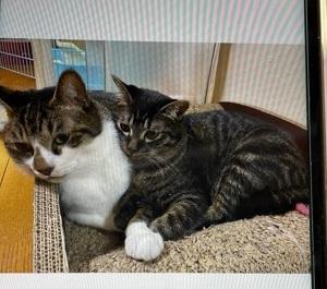 9/12 [9/5(日)]  卒業猫ら~の 幸せだより第3便にゃ~!