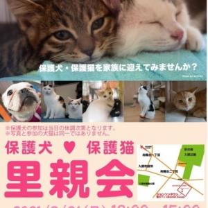 9/16 [9/12(日)]  保護犬保護猫譲渡会のお知らせ。