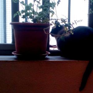 猫ちゃんのおやつ
